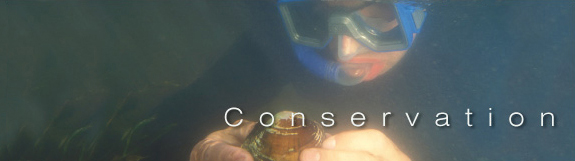 Mussels - Conservation banner